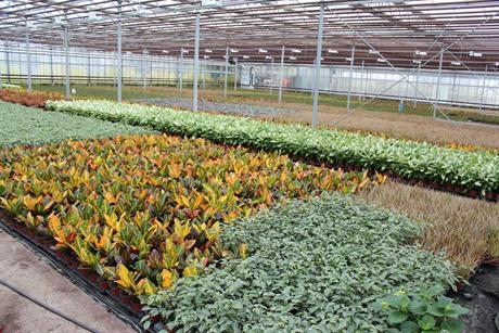 What opportunities are there for UK houseplant growers?